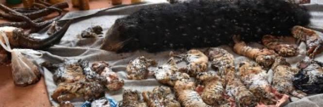 """Il """"Tempio delle Tigri"""" thailandese: morte, contrabbando e maltrattamenti 1"""