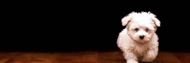 Mini Dog Club Lorgoglio Di Possedere Un Cane Di Piccola Taglia