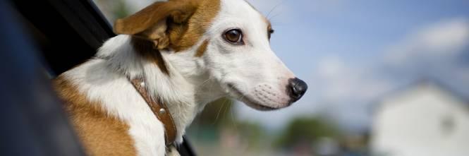 Hachiko E Gli Altri Cani E Gatti Soffrono Ma Possiamo Aiutarli