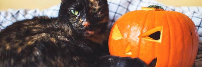 Halloween Chiesa.Meno Zucche Piu Santi La Chiesa Organizza La Contro Halloween