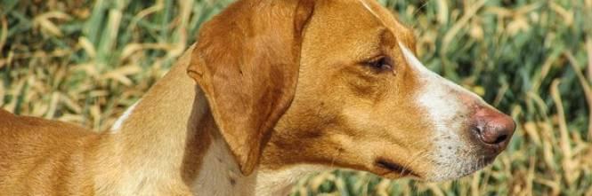 Chi d da mangiare ai cani randagi ne responsabile - Cane allo specchio ...