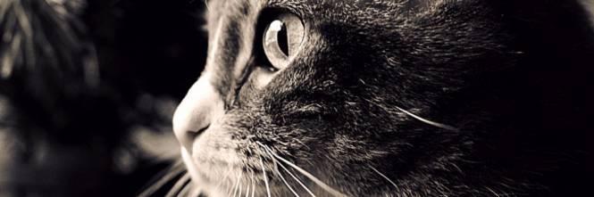 Dalloriente Con Amore La Vita Avventurosa Del Nostro Gatto Di Casa