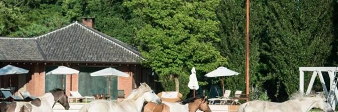 Il paradiso dei cavalli salvati dal macello e li facciamo adottare - Cavalli allo specchio ...