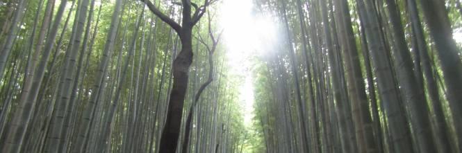 Arashiyama, il fascino invincibile della foresta di bambù 1