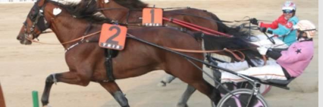 Corse Cavalli Milano Calendario.Il Cavallo Della Famiglia Micciche Vince Il Gran Premio A