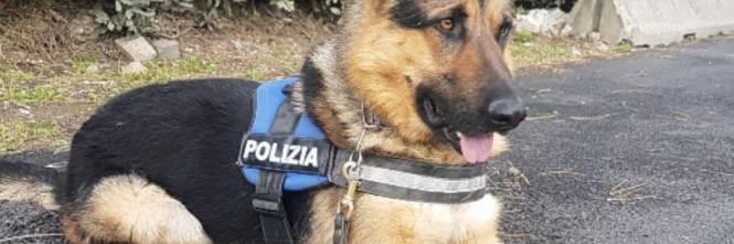 Ares Il Cane Randagio Diventa Poliziotto Ilgiornaleit