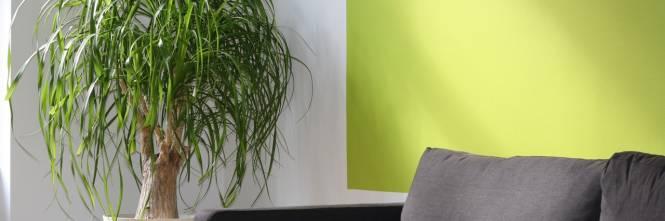 Casa le piante da interni che arredano e purificano l aria - Piante che purificano l aria in casa ...