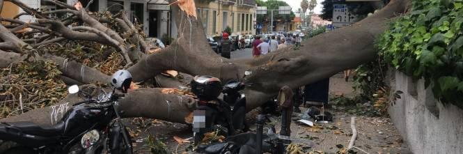 Crolla albero su Aurelia a Sanremo 1