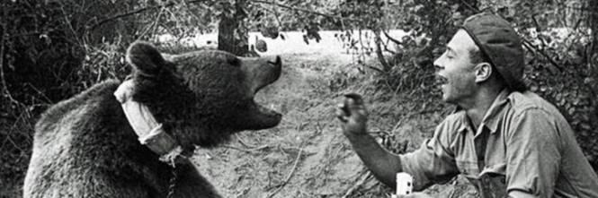 L orso eroe di montecassino diventa un cartone animato