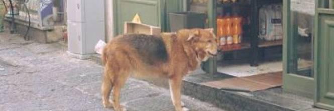 è Morto Billy Il Cane Che Per Anni Ha Visitato La Tomba Del Suo