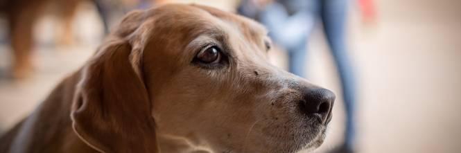 Napoli, paura al Vomero: picchia e prende a morsi il suo cane