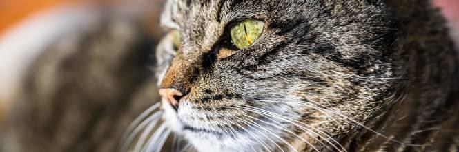 Australia Entro Il 2020 Uccisi 2 Milioni Di Gatti Con Bocconi