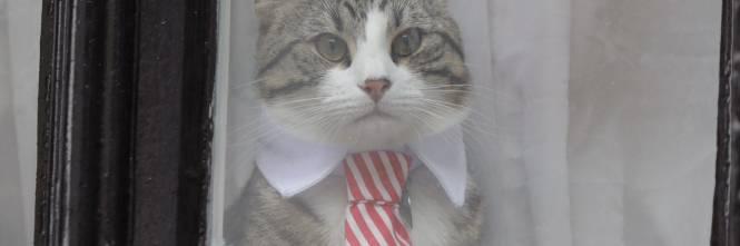Calendario Eta Gatti.In Cina E Nato Il Primo Gatto Domestico Clonato Ilgiornale It