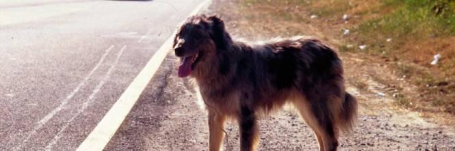 Il padrone muore e il cane lo aspetta sul luogo dell'incidente da un anno e mezzo