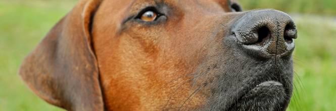 Cina, clonare il proprio cane domestico è ora possibile