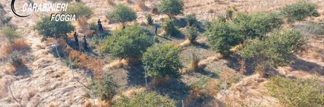 Manfredonia, coltivava marijuana: rumeno arrestato 1
