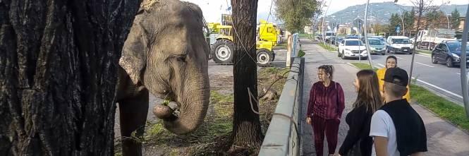 """Gli animali del circo """"parcheggiati"""" sull'asfalto 1"""