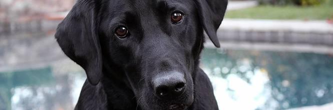 L'Inghilterra nega i cani ai non vedenti per assecondare l'islam