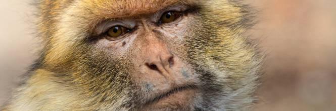 Un branco di scimmie massacra una famiglia: cinque persone uccise