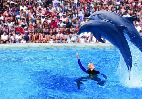Foche e delfini protagonisti  a «Zoomarine»