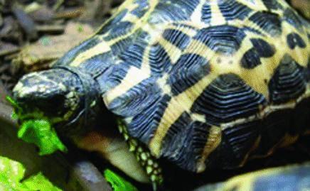 All'Acquario crescono le tartarughe