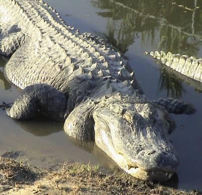 Australia, donna in gita con la famiglia divorata da coccodrillo