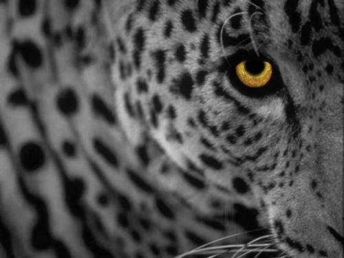 Apple ruggisce ancora: debutta Mac Os X Leopard
