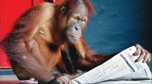 Zapatero: diritti umani  anche agli scimpanzè