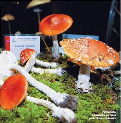 E' allarme funghi:  record intossicati