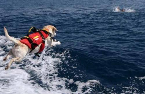Liguria, salvato da un amico a quattro zampe  Bagnante perde i sensi un cane lo porta a riva