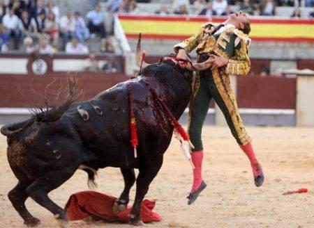 Ecco Ratòn, il toro killer  che infiamma la Spagna:  ha già ucciso 3 persone
