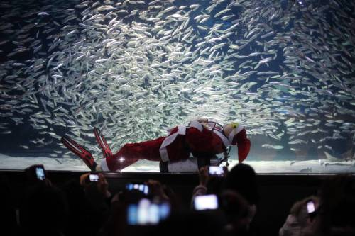 Seoul, Babbo Natale nuota nell'acquario
