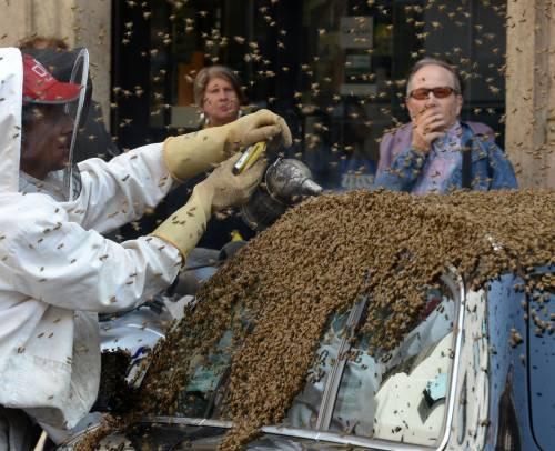 L'invasione delle api in via CesareaSulla macchina del console
