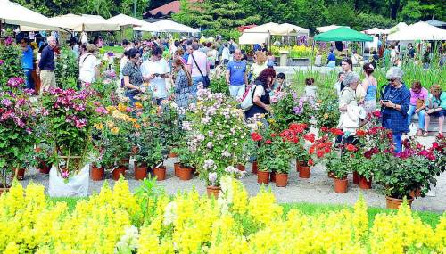 Tutto pronto per Orticola tra fiori, piante e cappelli