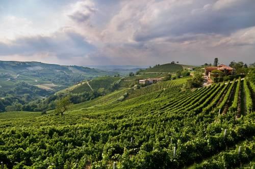 Oltrepò pavese: 1000 anni di tradizione al servizio del vino d'eccellenza