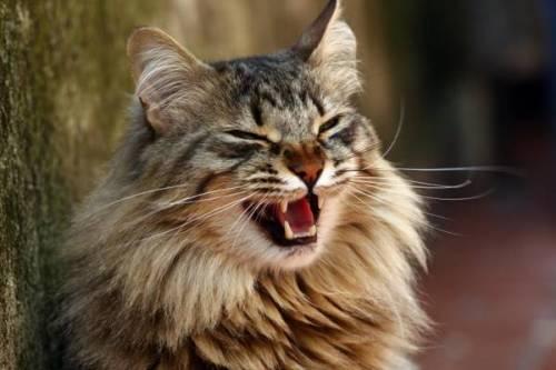 Il Gatto Morde Una Donna E Il Sindaco Lo Fa Arrestare Ilgiornaleit