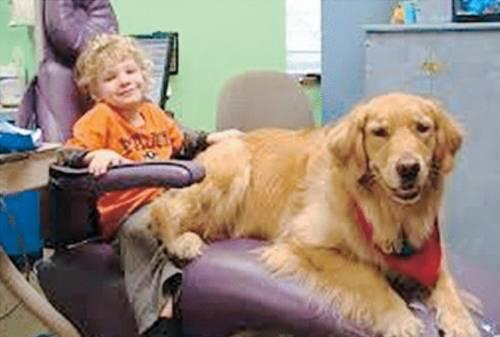 Il cane che cura i bimbi dal terrore del dentista
