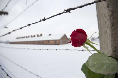 Sopravvissuti ad Auschwitz 3