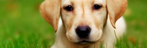 Il cane è in calore: gli amputa la zampa con un macete