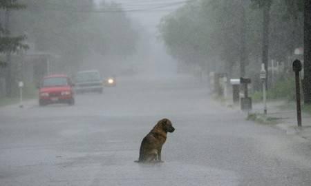 Rovigo: getta il cane dall'auto in corsa, glielo riportano e lo fa sopprimere