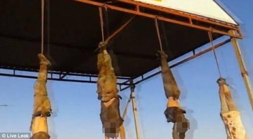 Orrore Isis a Kirkuk: cadaveri a testa in giù 4