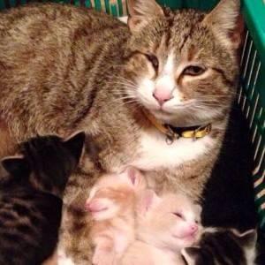 Lanciano la gatta della vicina in pasto ai pitbull, La polizia indaga su una famiglia romena