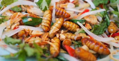 Ecco la #buonascuola di Renzi: insetti nell'insalata della mensa