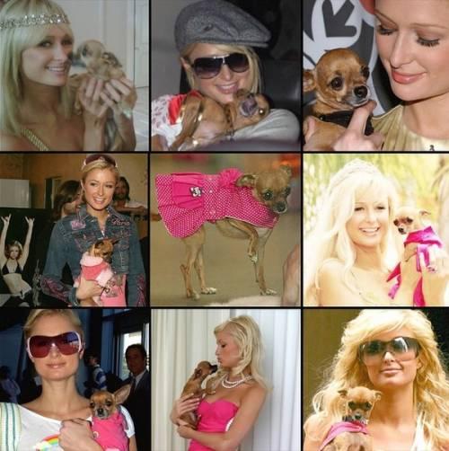 """Paris Hilton su Instagram: """"E' morta la mia Tinkerball"""" 2"""