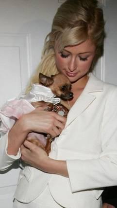 """Paris Hilton su Instagram: """"E' morta la mia Tinkerball"""" 7"""