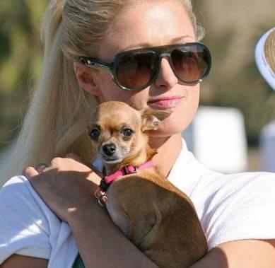 """Paris Hilton su Instagram: """"E' morta la mia Tinkerball"""" 8"""