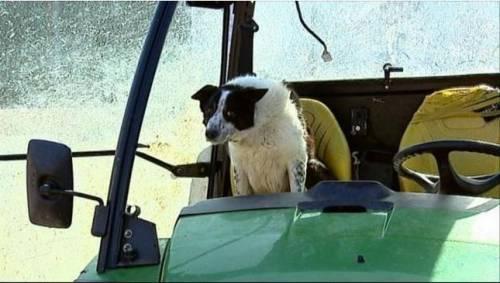 Cane alla guida di un trattore crea scompiglio in autostrada in Scozia