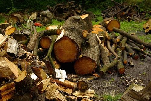 Ruba legna per scaldarsi, la ditta perdona ma i giudici no: multa di 25mila euro