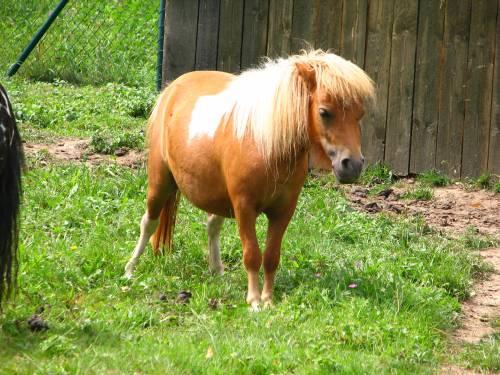 Fa sesso con un pony, contadino condannato a 18 mesi di carcere