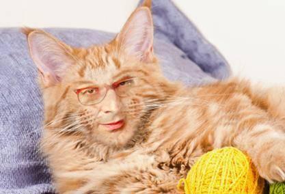 Vittorio Sgarbi invaso da immagini di gatti 8